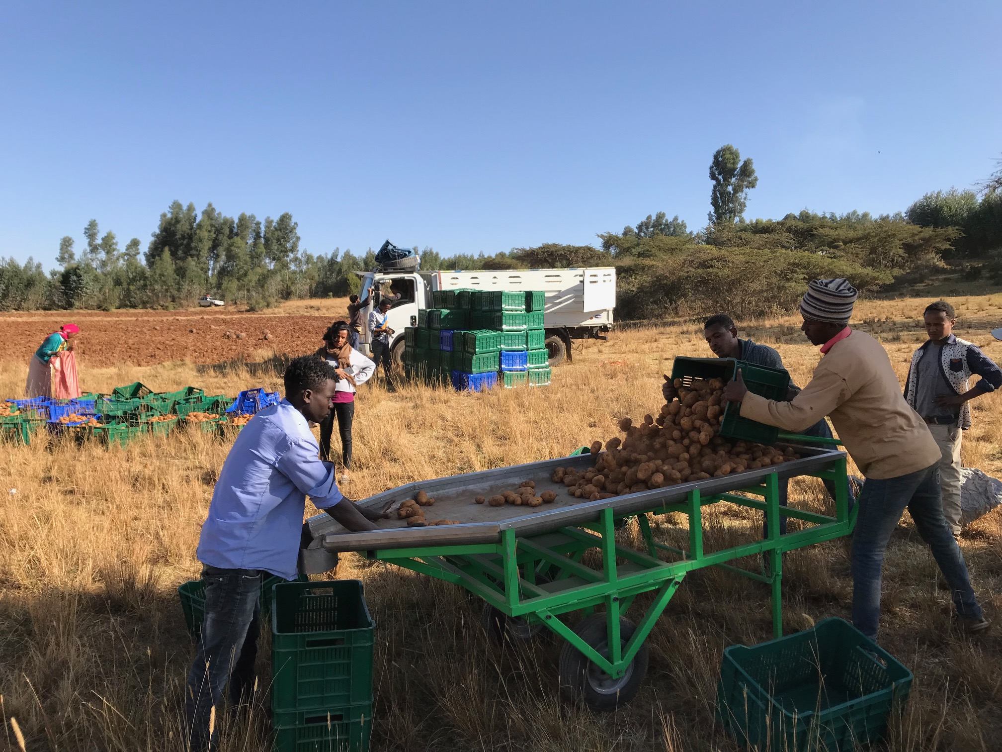 Senselet Link Between Ethiopian Farmers And Market